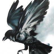 Rockin_Ravens
