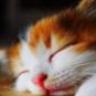 KittyCatElite