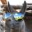 Llama_Llord